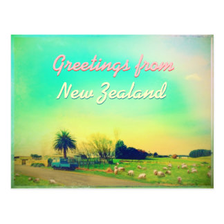 New Zealand sheep farms Postcard