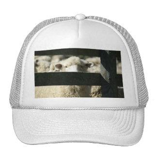 new zealand sheep trucker hat