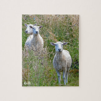 New Zealand Sheep photo puzzle with gift box