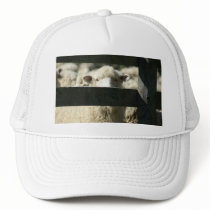 new zealand sheep trucker hat