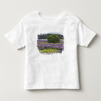 New Zealand, South Island. Blooming lupine and Toddler T-shirt