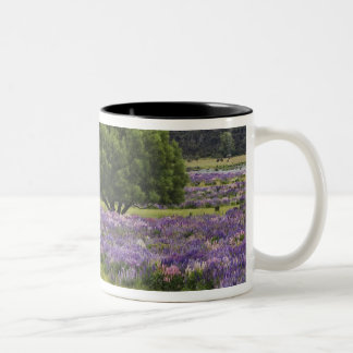 New Zealand, South Island. Blooming lupine and Two-Tone Coffee Mug