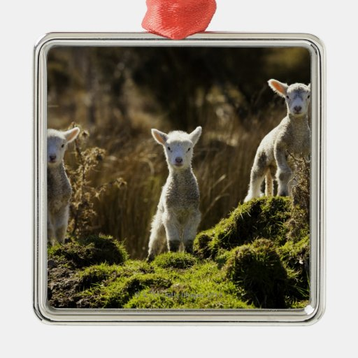 New Zealand, South Island, Fiordland National Christmas Ornaments