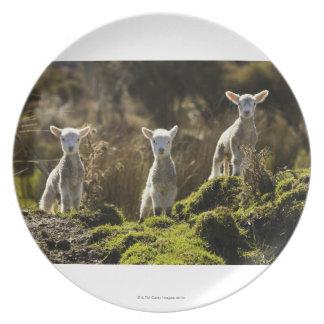 New Zealand, South Island, Fiordland National Plate