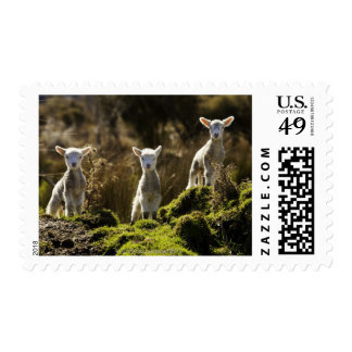 New Zealand, South Island, Fiordland National Postage