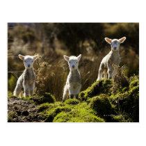 New Zealand, South Island, Fiordland National Postcard