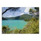 New Zealand, South Island, Marlborough Sounds. Card