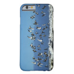 New Zealand, South Island, seagulls flying over Barely There iPhone 6 Case