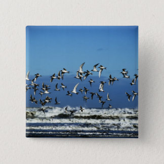 New Zealand, South Island, seagulls flying over Button
