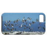 New Zealand, South Island, seagulls flying over iPhone SE/5/5s Case