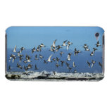 New Zealand, South Island, seagulls flying over iPod Touch Case