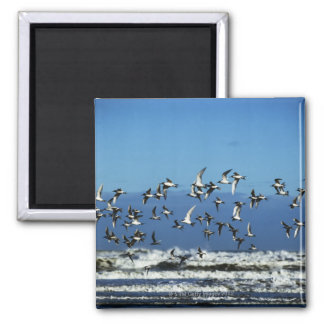 New Zealand, South Island, seagulls flying over Magnet