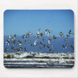New Zealand, South Island, seagulls flying over Mouse Pad