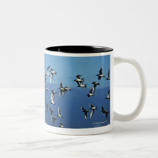 New Zealand, South Island, seagulls flying over Coffee Mugs