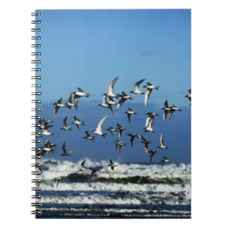 New Zealand South Island seagulls flying over Notebooks