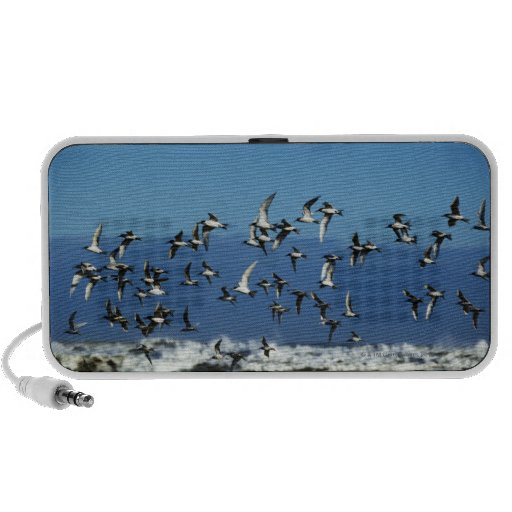 New Zealand, South Island, seagulls flying over Portable Speaker