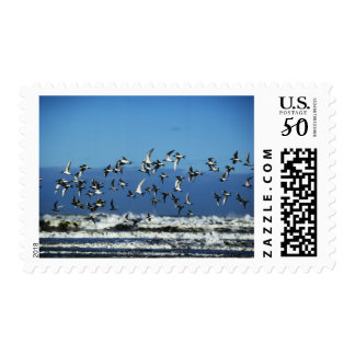 New Zealand, South Island, seagulls flying over Postage