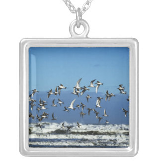New Zealand, South Island, seagulls flying over Square Pendant Necklace