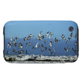 New Zealand, South Island, seagulls flying over Tough iPhone 3 Case