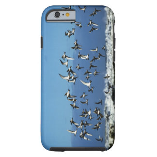 New Zealand, South Island, seagulls flying over Tough iPhone 6 Case