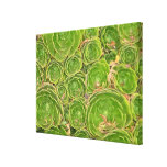 New Zealand, South Island. Succulent. Gallery Wrapped Canvas