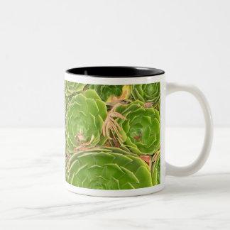 New Zealand South Island Succulent Coffee Mugs