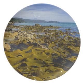 New Zealand, Southland, Stewart Island. Kelp Melamine Plate
