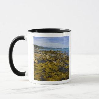 New Zealand, Southland, Stewart Island. Kelp Mug
