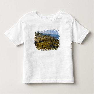 New Zealand, Southland, Stewart Island. Kelp Toddler T-shirt