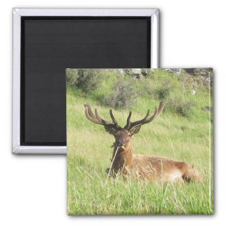 New Zealand Stags 2 Inch Square Magnet
