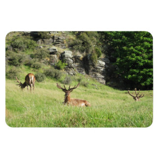 New Zealand Stags Rectangular Photo Magnet