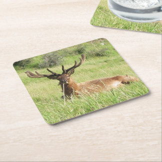 New Zealand Stags Square Paper Coaster