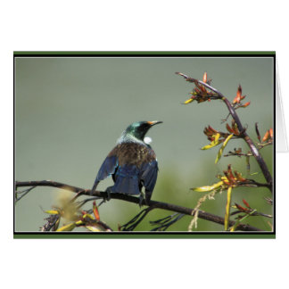 New Zealand Tui perched on flax Greeting Card