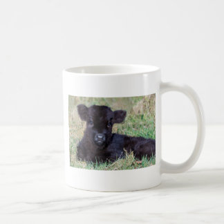 Newborn black scottish highlander calf lying coffee mug