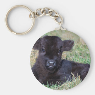 Newborn black scottish highlander calf lying keychain