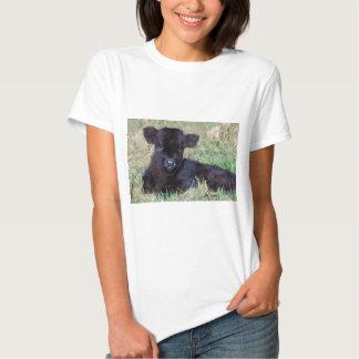 Newborn black scottish highlander calf lying tee shirt