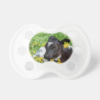 Newborn calf lies in meadow with yellow dandelions pacifier