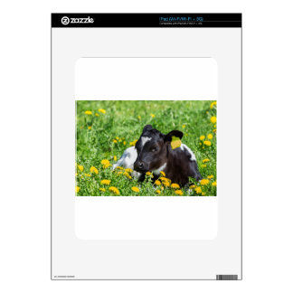 Newborn calf lies in meadow with yellow dandelions skins for iPad