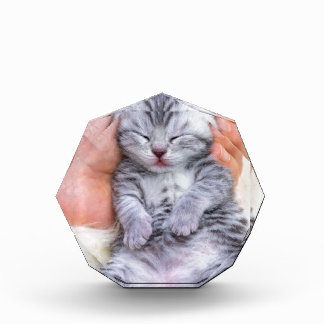 Newborn cat lying sleepy in hand on fur award