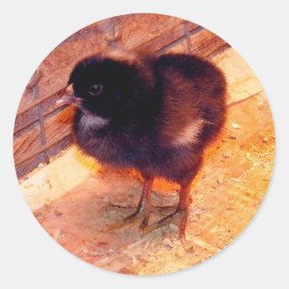 Newborn Chick (2) Round Sticker