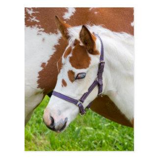 Newborn foal white brown with horse.JPG Postcard