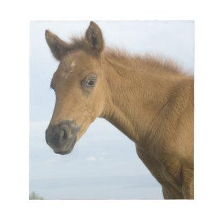 Newborn Horse Note Pad