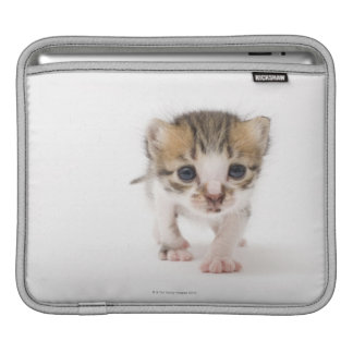 Newborn kitten sleeves for iPads