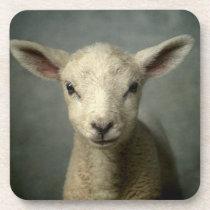 Newborn Lamb Beverage Coaster