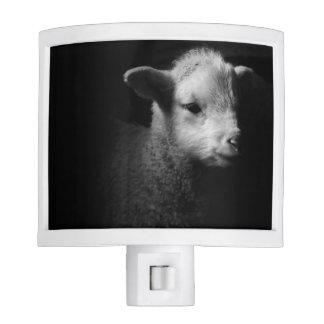 Newborn lamb in dramatic lighting. nite light