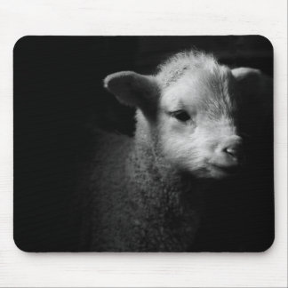 Newborn lamb in dramatic lighting. mouse pad