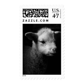 Newborn lamb in dramatic lighting. postage