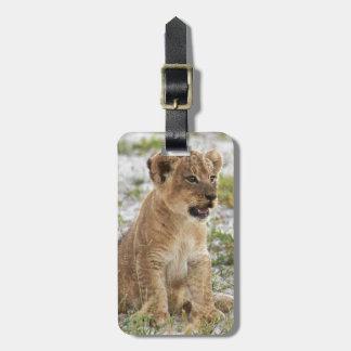 newborn lion cub etiqueta de equipaje