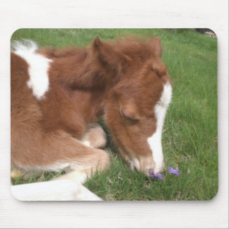Newborn Pony - Spirit Mouse Pad