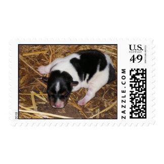 newborn puppy stamp